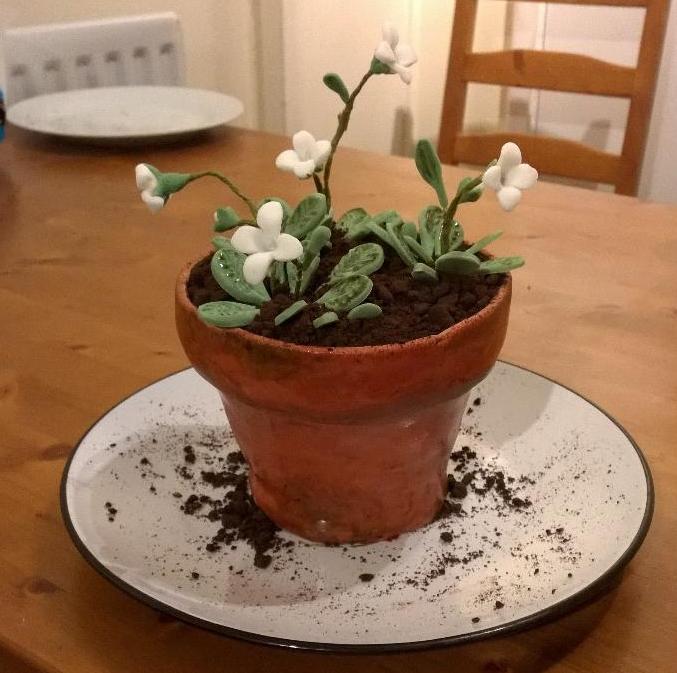 Arabidopsis cake