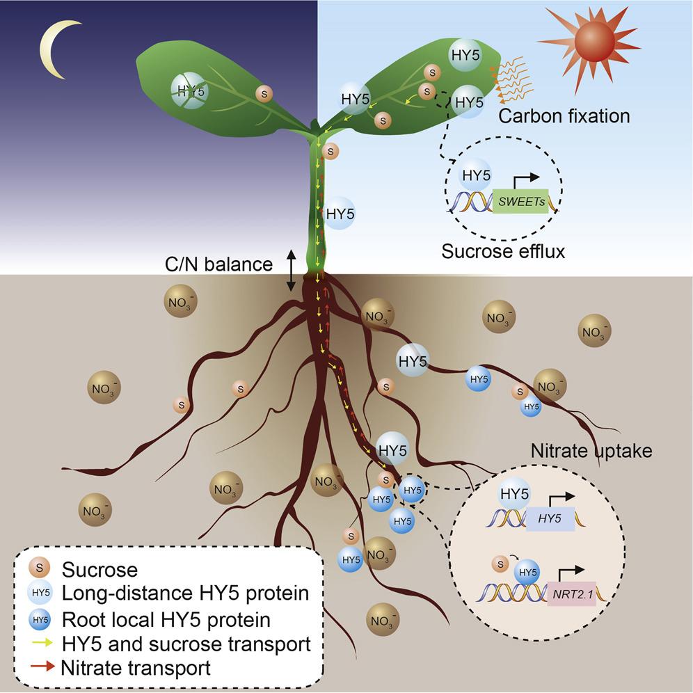 Dissertation Mycorrhiza