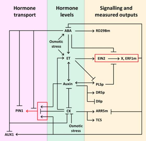 HormoneSig